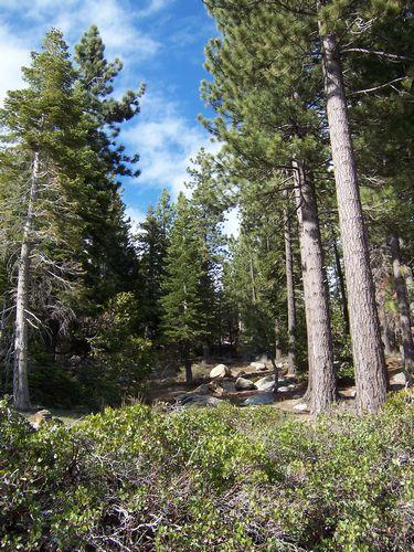 Reno (palo-alto_100_8977.jpg) wird geladen. Eindrucksvolle Fotos von der Westküste Amerikas erwarten Sie.