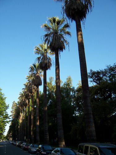 Sacramento (palo-alto_100_8991.jpg) wird geladen. Eindrucksvolle Fotos von der Westküste Amerikas erwarten Sie.